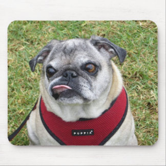 Pug Rescue Halloween Party, 2012 Mouse Pad
