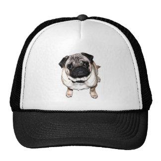 Pug Richi Mesh Hats
