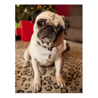 Pug sitting on carpet, Christmas tree Postcard