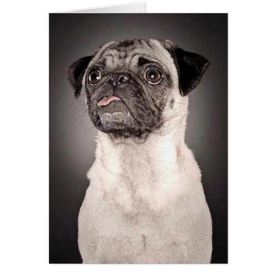 Pug Standing Up and Attentive with Tongue Out Card