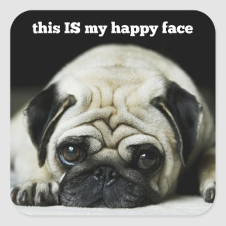 """Pug """"this IS my happy face"""" Square Stickers"""