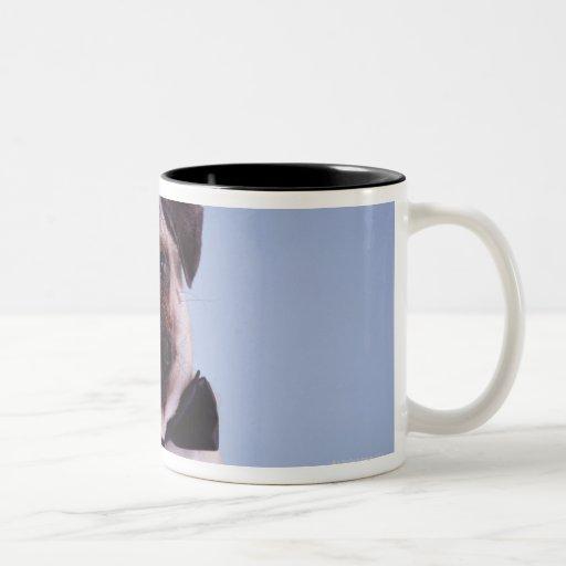 Pug wearing bow tie, close-up coffee mugs