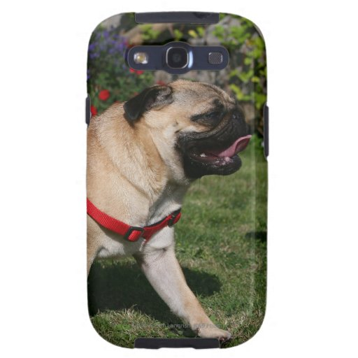 Pug Wearing Red Harness Galaxy S3 Cases