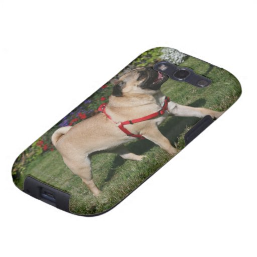 Pug Wearing Red Harness Galaxy S3 Cover