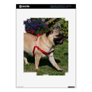 Pug Wearing Red Harness iPad 3 Decal