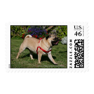 Pug Wearing Red Harness Stamps