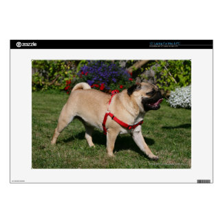 Pug Wearing Red Harness Laptop Decal