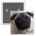 Pug What? Pinback Buttons