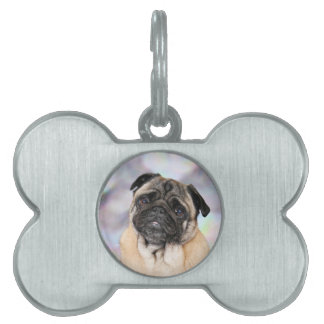 Pug - Willy Pet Name Tag