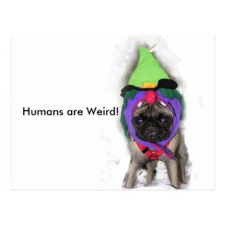 Pug Witch Postcard