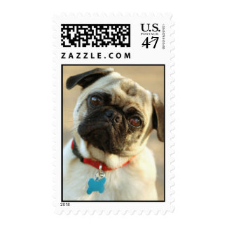 Pug with a Questioning Expression Postage Stamp