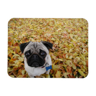 Pug with Leaves Photo Rectangular Photo Magnet