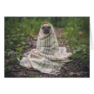 Pug wrapped in a blanket card