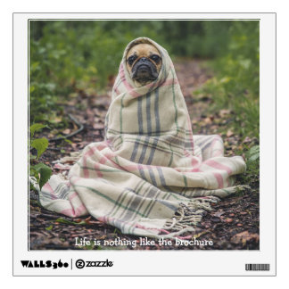 Pug wrapped in a blanket wall sticker