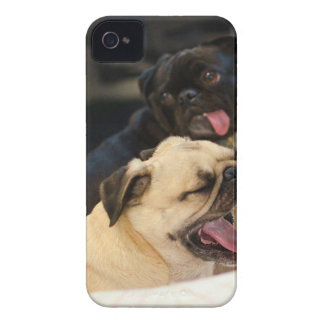 Pug Yawn iPhone 4 Covers