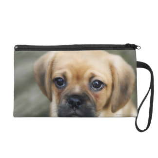 Pugalier Puppy Looking at Camera Wristlet