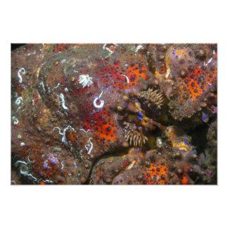 Puget Sound King Crab Photo Enlargement