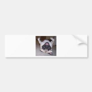 Puggin alrededor etiqueta de parachoque