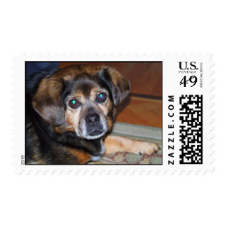 Puggle Dog Postage Stamps