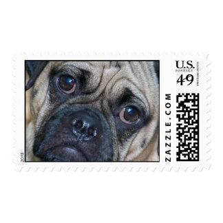 puggle face stamp