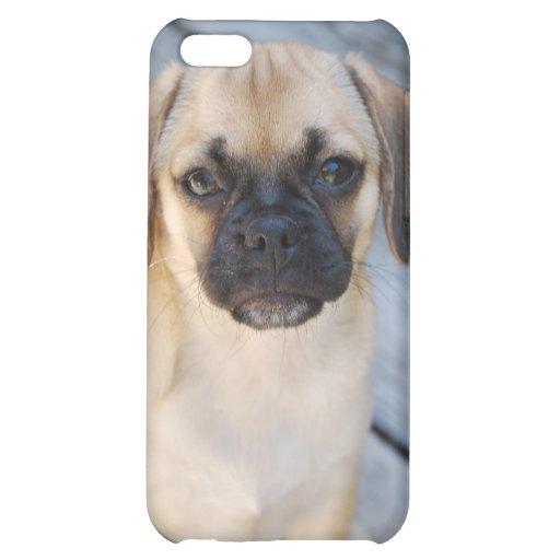 Puggle i- 4  cover for iPhone 5C