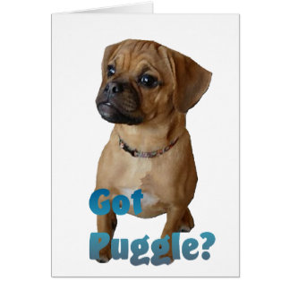 Puggle Lovers Gifts Card