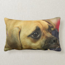 Puggle pillow