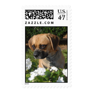 Puggle Stamp