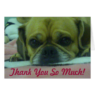 PUGGLE Thank you So Much greeting card