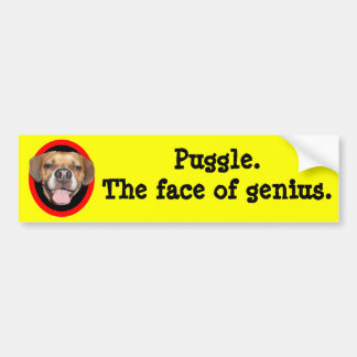 Puggle. The face of genius. Car Bumper Sticker