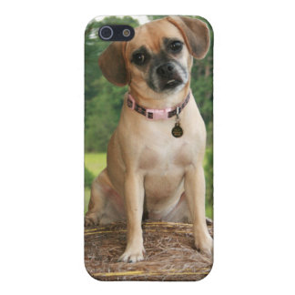 Puggly & Confused Cover For iPhone SE/5/5s