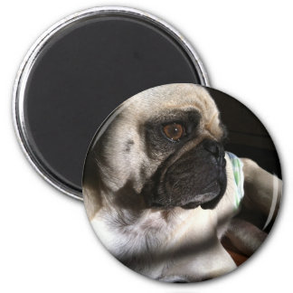 Puggy for your thoughts... refrigerator magnets