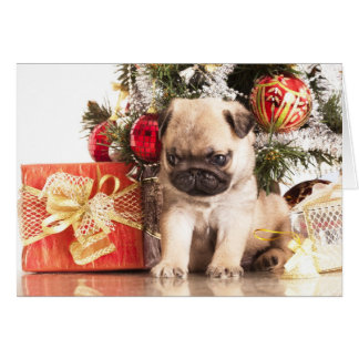 Pugs and Christmas gifts Card