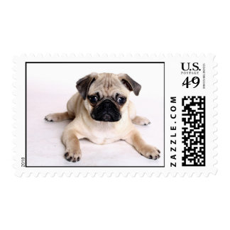 Pugs in the Mail Postage Stamps