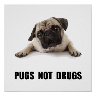 Pugs Not Drugs Poster