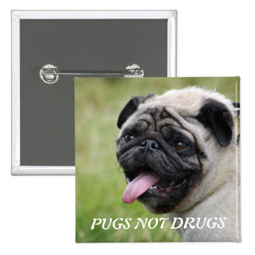 Pugs not drugs, pug dog cute photo button, pin