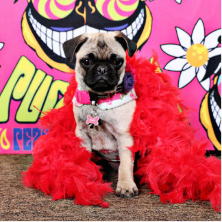 Pugstock 2015 - Pixie - Pug Standing Photo Sculpture