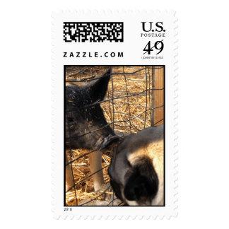 PugsUp Stamps
