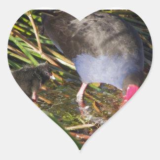 Pukeko and Chick Splashing Heart Sticker