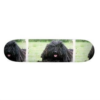 Puli Dog Skateboard