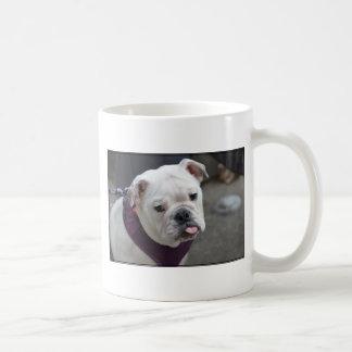 Pulla del dogo tazas de café