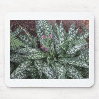 Pulmonaria - Lungwort perennial Mousepads