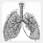 Pulmones médicos del vintage de la anatomía retra pegatina cuadrada