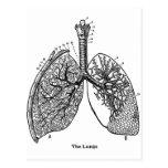 Pulmones médicos del vintage de la anatomía retra postal