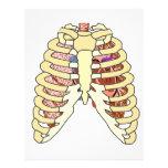Pulmones y corazón de la caja torácica tarjetas informativas