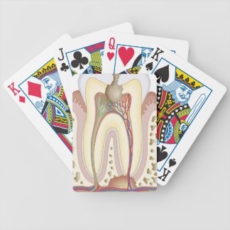 Pulp and Root Abscess Bicycle Playing Cards