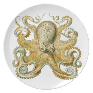Pulpo común en una placa plato de cena