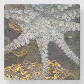 Pulpo con tentáculos expuestos de la ventosa posavasos de piedra