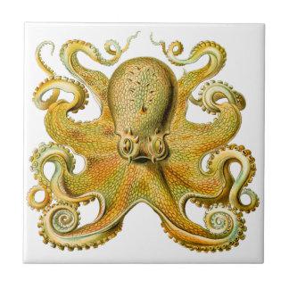 Pulpo de Ernst Haeckel del vintage en amarillo Azulejo Cuadrado Pequeño