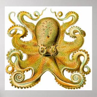 Pulpo de Ernst Haeckel del vintage en amarillo Posters